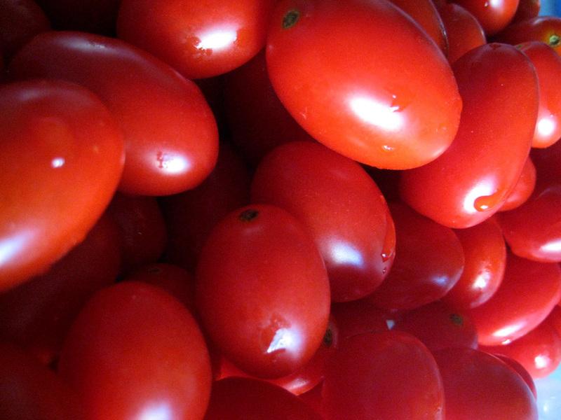 トマトの収穫。